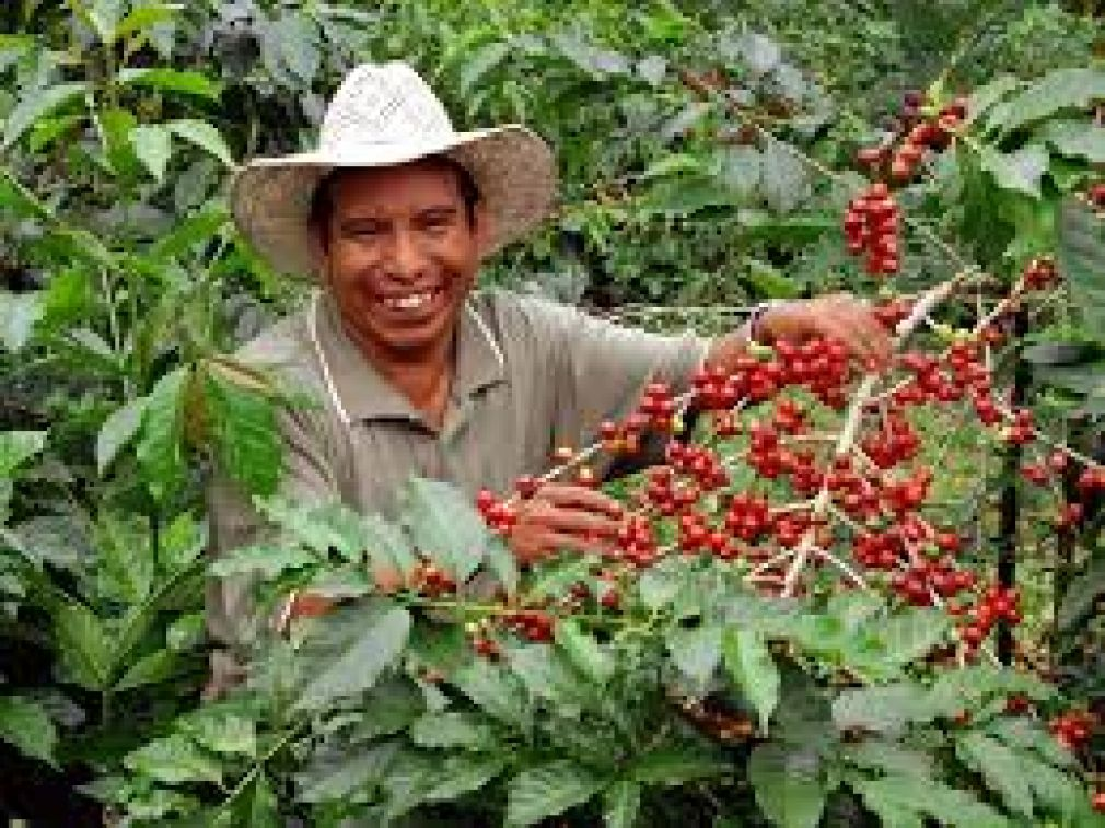 Coffee from Guatemala